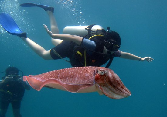 Chalong, Thailand: Discover scuba dive with Bubba Diving Phuket