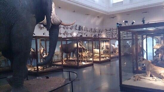 The Natural History Museum: The exhibition