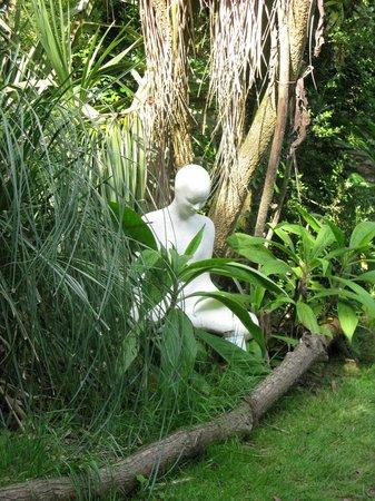 Wild Subtropical Garden: Contemplation by Ginger Gilmour