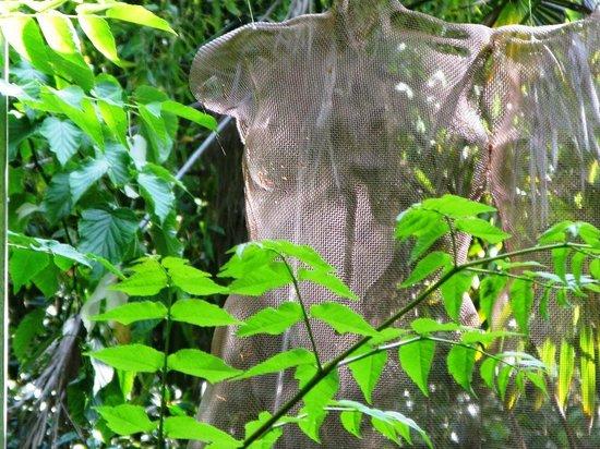 Wild Subtropical Garden: Tuusum by David Begbie