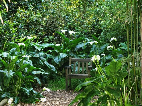 Wild Subtropical Garden: A quiet spot in the Jungle
