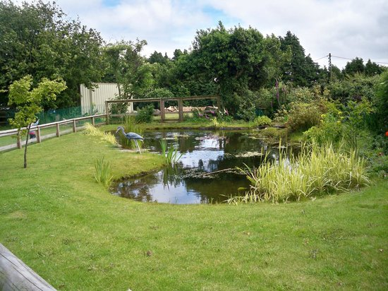 ty mawr: The pond in the garden