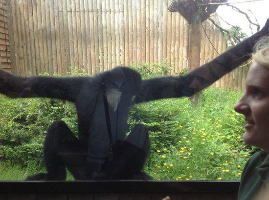 Monkey sucking his own dick
