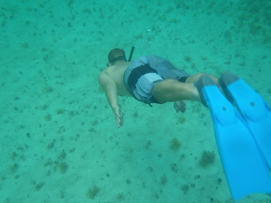 Allegro Cozumel: Snorkeling off the beach