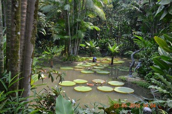 シンガポール植物園>