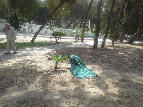 Hotel Parque Mar: Парк рядом с отелем
