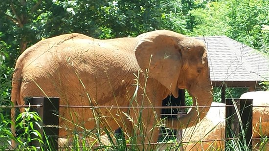 You Can Get Close Picture Of Riverbanks Zoo And Botanical Garden Columbia Tripadvisor