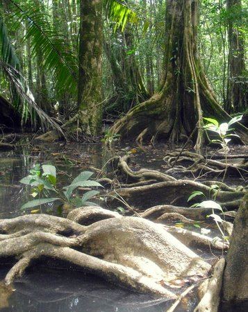 Saladero Eco Lodge: During the mangrove tour