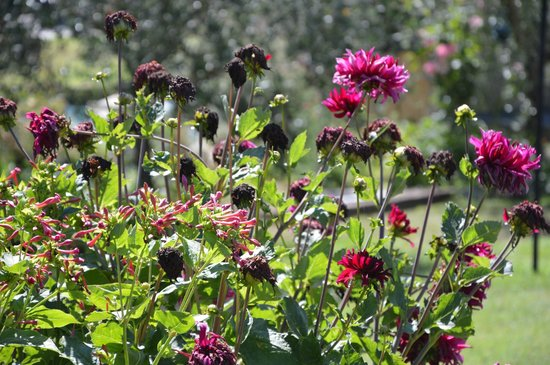 Il Giardino Degli Angeli : The garden