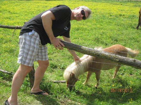 Pension Kezele: Animals on grounds