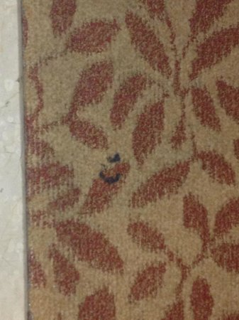 Crowne Plaza Memphis East : Dirty, stained carpet.