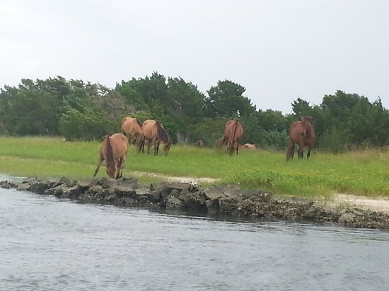 Waterbug Tours: the beautiful wild horses