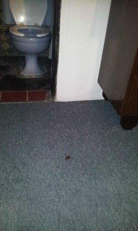 Hotel Posada de las Monjas: cockroaches in the bathroom too