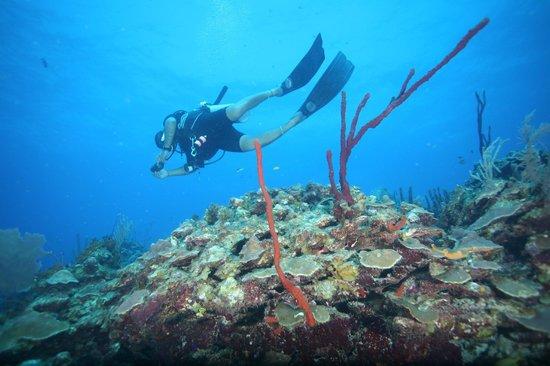 Blackbird Caye Resort: Divemaster Efrin