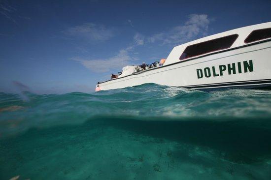 Blackbird Caye Resort: Dive Boat