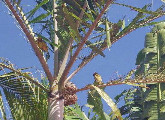 Cocotiers Seaside Boutik Hotel: les oiseaux du jardin