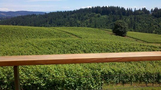 Oregon Wine Tours: thistle winery