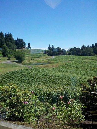 Oregon Wine Tours: elk cove