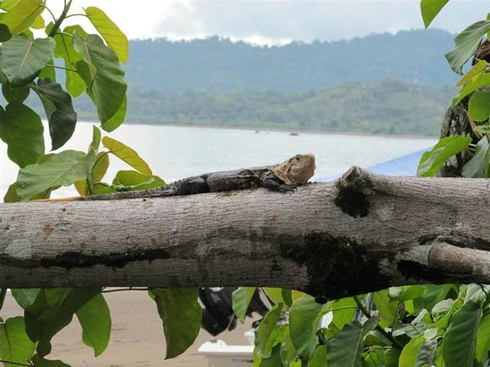 Aguila de Osa: Awaiting transport for zipline trip.Just one of the guys hanging out by the beach.