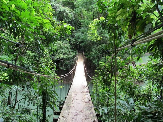 Aguila de Osa: A hanging bridge to the beach and more scenic sights. Just go for a walk.  Enjoy.
