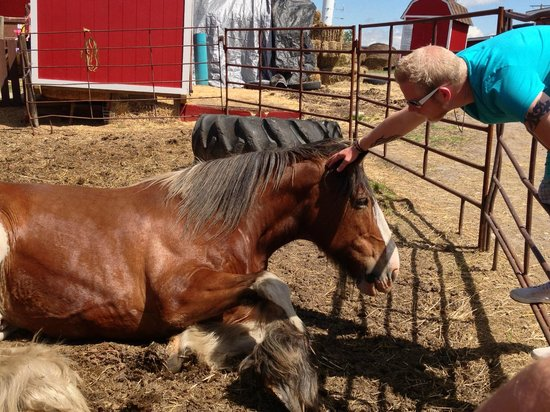 Butterfield Acres Farm: Draft horse pen...no shade, shelter or water