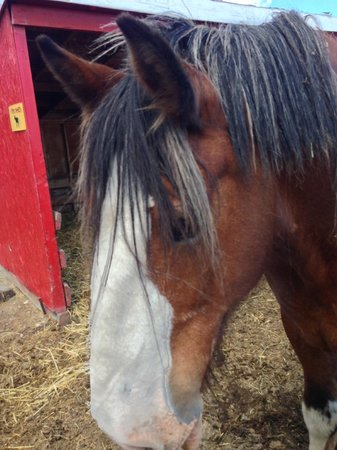 Butterfield Acres Farm: He got up to eat the handfuls of fresh grass we offered him