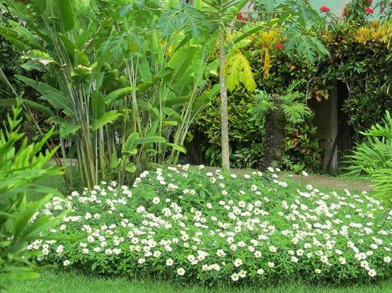 Beautiful flora of Villas Rio Mar, Dominical, Costa Rica