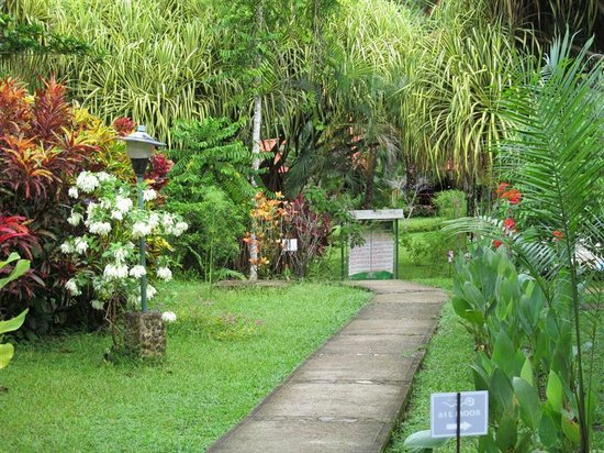 Villas Río Mar: A gentle path leading to the beauty of Villas Rio Mar, Dominical, CR