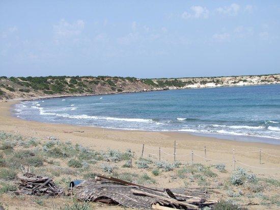 Lara Bay Turtle Conservation Station : Lara Beach