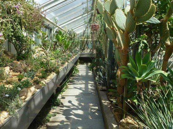Botanischer Garten: Sukkulenten Gewächshaus (2)