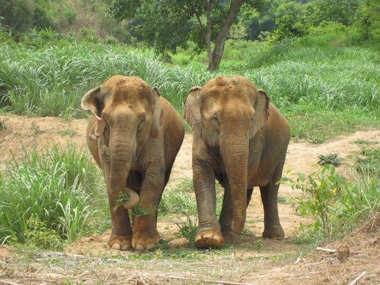 Boon Lott's Elephant Sanctuary: ele's on our walk