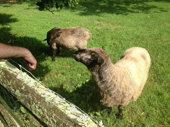 Woolverton Inn: They're pretty friendly!