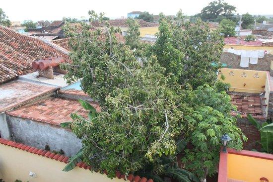 Casa Amigos del Mundo : Avocadobaum im Garten