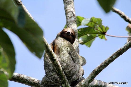 Arenal Paraiso Hotel Resort & Spa: 3-toed sloth