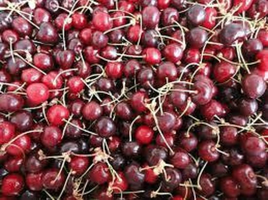 The Cherry Orchard B&B: And more Bing Cherries all in Season NOW!
