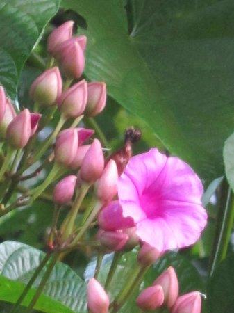 Mapa Te Lodge: Fleur de la selva