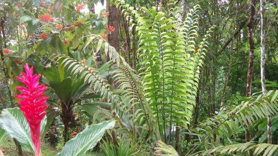 Jade Mar Cabins: Plantas qde exhuverante belleza