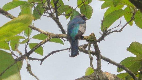 Jade Mar Cabins: Aves de gran belleza que rodean los Jardines