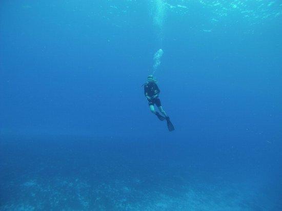 Studio Blue Dive Center : hot diver above the reef