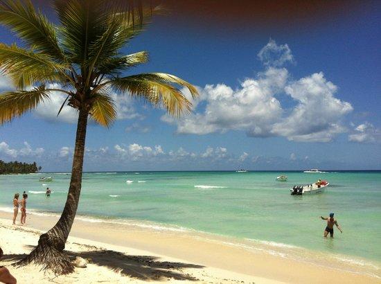 Saona Picture Of Dreams Palm Beach Punta Cana Punta