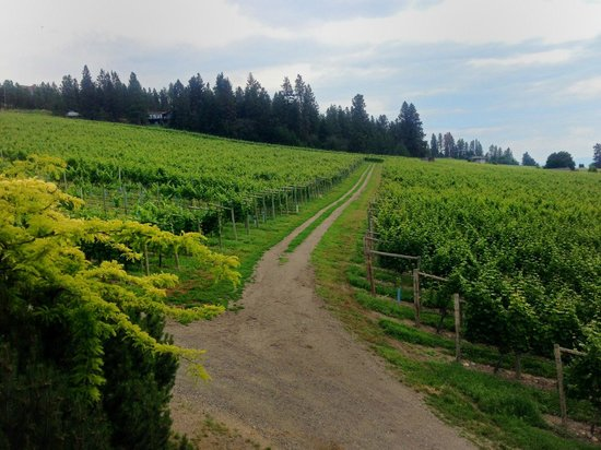 Gray Monk Estate Winery : View of the Grey Monk Vineyards