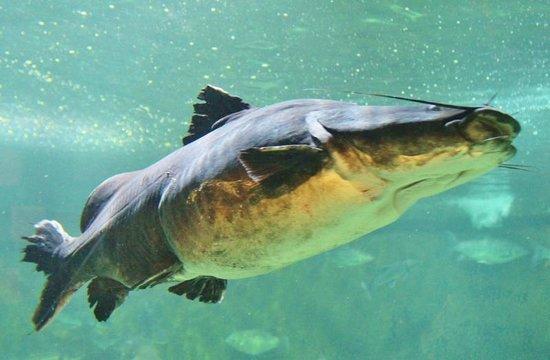 Zoo Negara: Catfish Aquarium KL Zoo