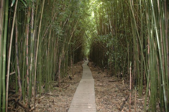 Pipiwai Trail: The bamboo forest