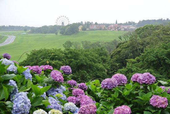 Tokyo German Village: あじさいの森から芝生広場