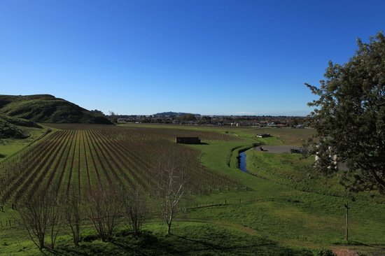 Mission Estate Winery: Serenity