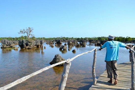 Wasini Island with coral spirit