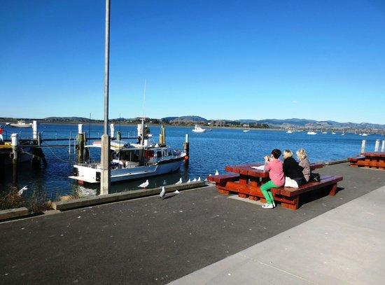 Bobby's Fresh Fish Market: Sea, sun & seagulls