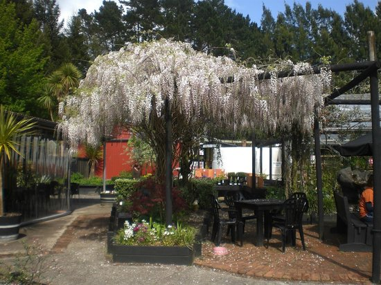 Red Shed Palazzo: wisteria