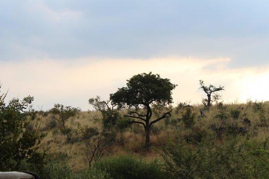 Tuningi Safari Lodge: WANDERWEG DER ELEFANTEN VOR DER EIGENEN TERRASSE
