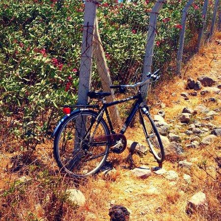 Hotel Manastir: Rent a Bike :)